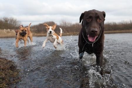 urgencia veterinari amer